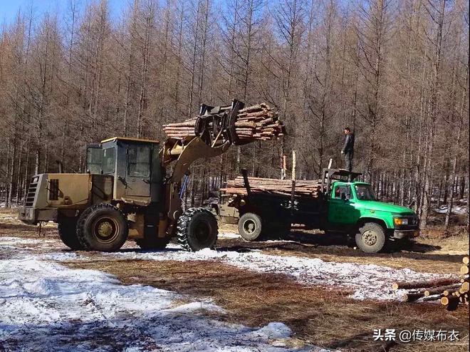 """停伐前,林區有一項工作叫""""森林撫育間伐"""",你知道嗎?"""