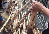 一起看看,海南最大的海南黃花梨市場