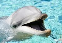 鯊魚為什麼會害怕海豚?海豚真的很危險嗎?