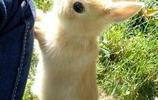 萌萌噠的公主兔