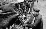 60年前的新中國 蓬勃發展的畜牧業