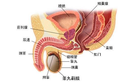 「前列腺」90%的男性都中招,你的前列腺還健康嗎?