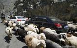"""號稱""""中國最美公路""""新疆獨庫公路迎來旅遊旺季"""