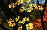 圖蟲攝影:關門山紅葉美比日本