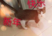 有哪些搞笑的貓咪表情包?