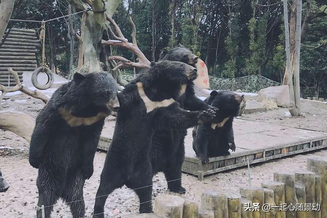 雪後淹城野生動物園成為打卡熱門景點,遊客:春節車太多!