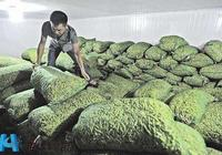 蔬菜冷庫建造用於貯藏保鮮蔬菜的實例列舉
