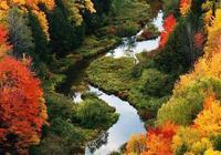 「美圖欣賞」秋之韻|秋色漸遠意未盡,入山紅葉賞不盡|