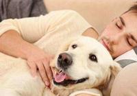主人越是疼愛狗狗,這5件事越是不要對它做,狗狗會很傷心!