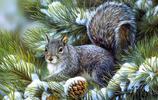 動物圖集:在雪地裡活動的松鼠
