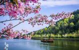 武漢最低調景區,櫻花是武大的20倍,美景不輸鳳凰,卻鮮為人知!