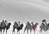 【百花】民勤駱駝客