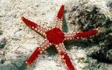 動物圖集:美麗的海星