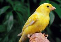 觀鳥小技巧,根據鳥鳴聲識別鳥,學會可以吹一年(二)