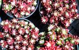 行走的風景——直須看盡滿城花,始共春風容易別2