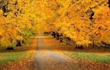 今天最後最美的晚秋!美到心縫裡了!