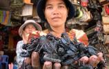 越南昆蟲市場