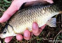 13個通用野釣餌料配方,野釣餌料還是自制的好