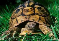 民間故事:小夥子放生烏龜,沒想到這烏龜竟然是一方河神