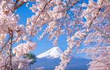 這組圖帶你看看日本的櫻花到底有多漂亮,沒去過日本的點開看看!