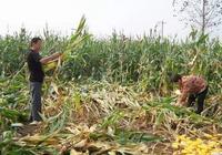 農民的窮是因為懶嗎?農民到底為什麼窮?農民:分析的...