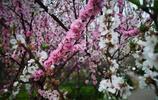 濟南賞花季你認識這幾種花嗎?