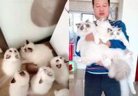 養了18只布偶貓的鏟屎男 是什麼狀態來看看吧!