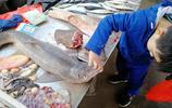 海鮮市場售賣鯊魚引圍觀 魚肉每斤12元 鯊魚寶寶很可憐 你覺得呢