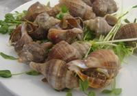 海螺能不能吃?