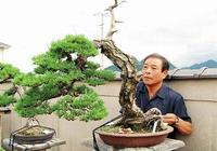 高鬆盆景防颱風