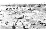 上世紀50年代,有一支荒漠開墾先遣隊來到塔里木盆地