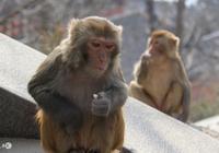 猴猴:如果生日帶了這個數字,那就恭喜了!你的一生都會富得流油