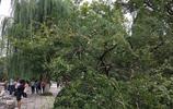 濟南五龍潭石榴成熟都爛在了樹上 無人採摘可惜!