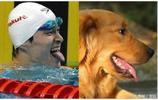 最新版明星與寵物神同步表情,趙麗穎超萌,鹿晗的表情真是絕了
