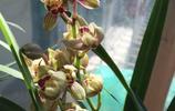 為啥不早點告訴我,養蘭花就用這一藥一水一料,長得健壯,開花旺