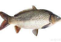 四大家魚有鯉魚嗎?為何有的南方農村地區的人不愛吃鯉魚呢?