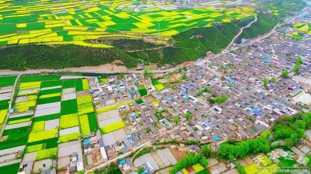 甘肅武山縣的油菜花海