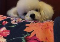 有些養狗的人允許狗上床睡覺,這是什麼心理?