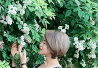 薔薇花開滿院香