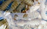 皮皮蝦重現海鮮市場 個頭大的30塊錢一斤 價格等同秋季剛上市