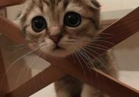 吸貓——小奶貓養成手冊,這麼萌的小可愛你想抱走嗎!