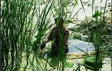母親節前夕,近七旬老奶跳到池塘裡為兒子開飯店拔蒲菜