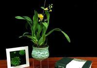 那些好看卻叫不上名的家居植物,都給你整理好啦
