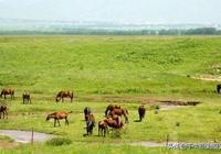 新疆旅行前,你應該知道這些......能讓你事半功倍,要去的藏好!