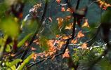 攝影:楓繼續吹