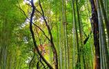 全屏高清壁紙,鮮花綠竹,豔麗柔美,相得益彰