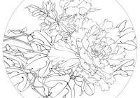 畫法分享:李曉明工筆牡丹《狀元紅》繪製步驟