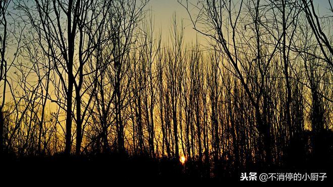 北京冬日美景指南——落葉中的奧林匹克森林公園