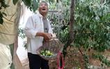 """農村69歲大叔家裡種一棵""""黃金果"""",百元1斤也不賣,看看是個啥"""