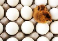 為什麼說,一天只能吃一個雞蛋,這是真的嗎?吃多了的話會怎麼樣呢?